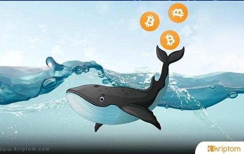 Balinalar 500 Milyon Dolarlık Bitcoin'i Hareket Ettirdi – Selloff mu Geliyor?