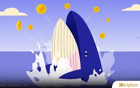 Balinalar Yine Coştu! İşte Transfer Edilen Devasa Bitcoin Rakamı