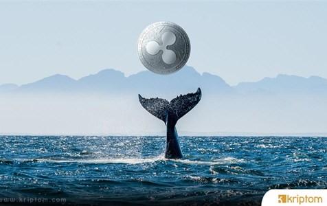 Balinalardan Devasa XRP  Hareketleri! Neler Oluyor?