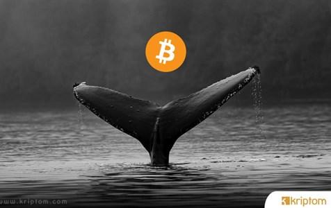 Bitcoin Balinaları Yine Sahnede – Yeni Hamlelerde Neler Var?