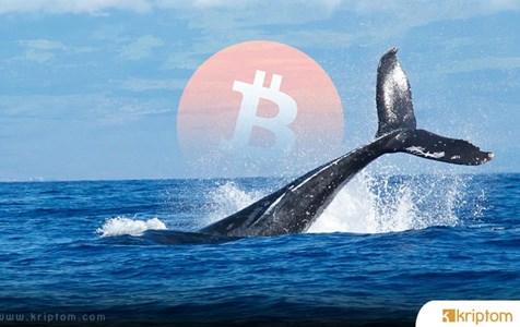 Bitcoin Balinaları Coştu – Hareket Ne Anlama Geliyor?