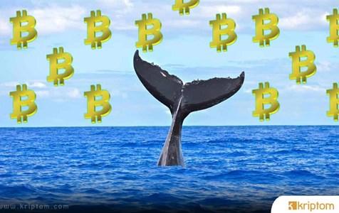 Bitcoin Balinaları Coştu – İşte Hareket Eden Devasa Rakam