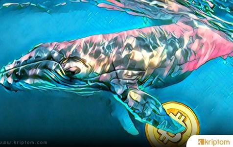 Bitcoin Balinaları Daha Fazla BTC mi Biriktirmeye Başladı?