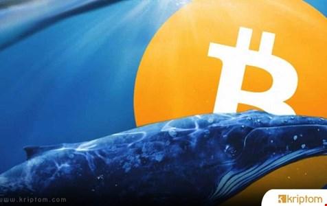 Bitcoin Balinaları Milyon Dolarları Taşıdı – Neler Olacak?