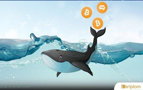 Bitcoin'de Çılgın Balina Hareketleri Ne Anlama Geliyor?
