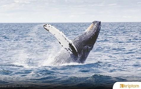 Bitcoin ve Ripple Balinaları Hareket Etti – Yer Yerinden Oynadı