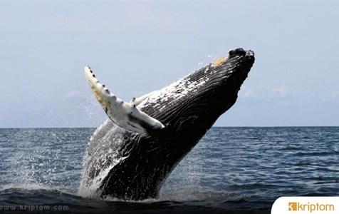 BTC Balinaları Uyarıyor: Fiyattaki Artış Organize bir FOMO