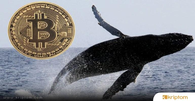 Çin'in Kripto Müdahaleleri BTC Balinalarının Hamle Yapmasına Sebep Oldu