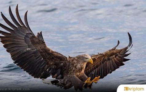 Ethereum Eagle (EGL) Nedir? İşte Tüm Ayrıntılarıyla Kripto Para Birimi EGL Coin