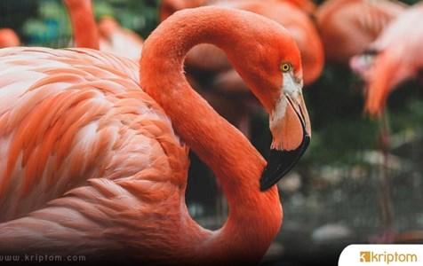 Flamingo (FLM) Nedir? İşte Tüm Detaylarıyla Kripto Para Birimi FLM Coin