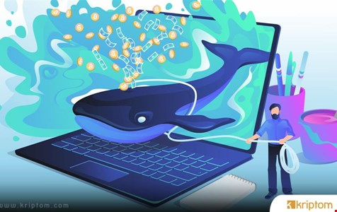 Kripto Balinaları Hızlı Bir Şekilde Ethereum Birikiyor