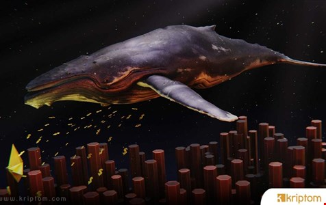 Ripple Balinaları Harekete Geçti! Fiyat Dump'ı mı Geliyor?