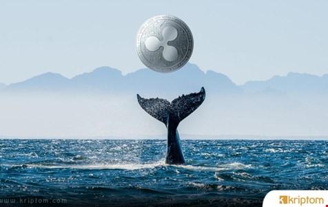 Ripple Balinaları Harekete Geçti: Yaklaşık 120 Milyon XRP Büyük Borsalardan Taşındı