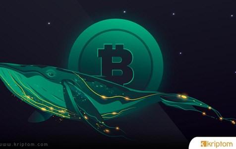 Son Balina Hareketleri Bitcoin İçin Ne Anlama Geliyor?